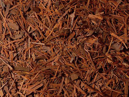Lapacho du Brésil à infuser boutique Histoires de thés à Cosne-sur-Loire 58200